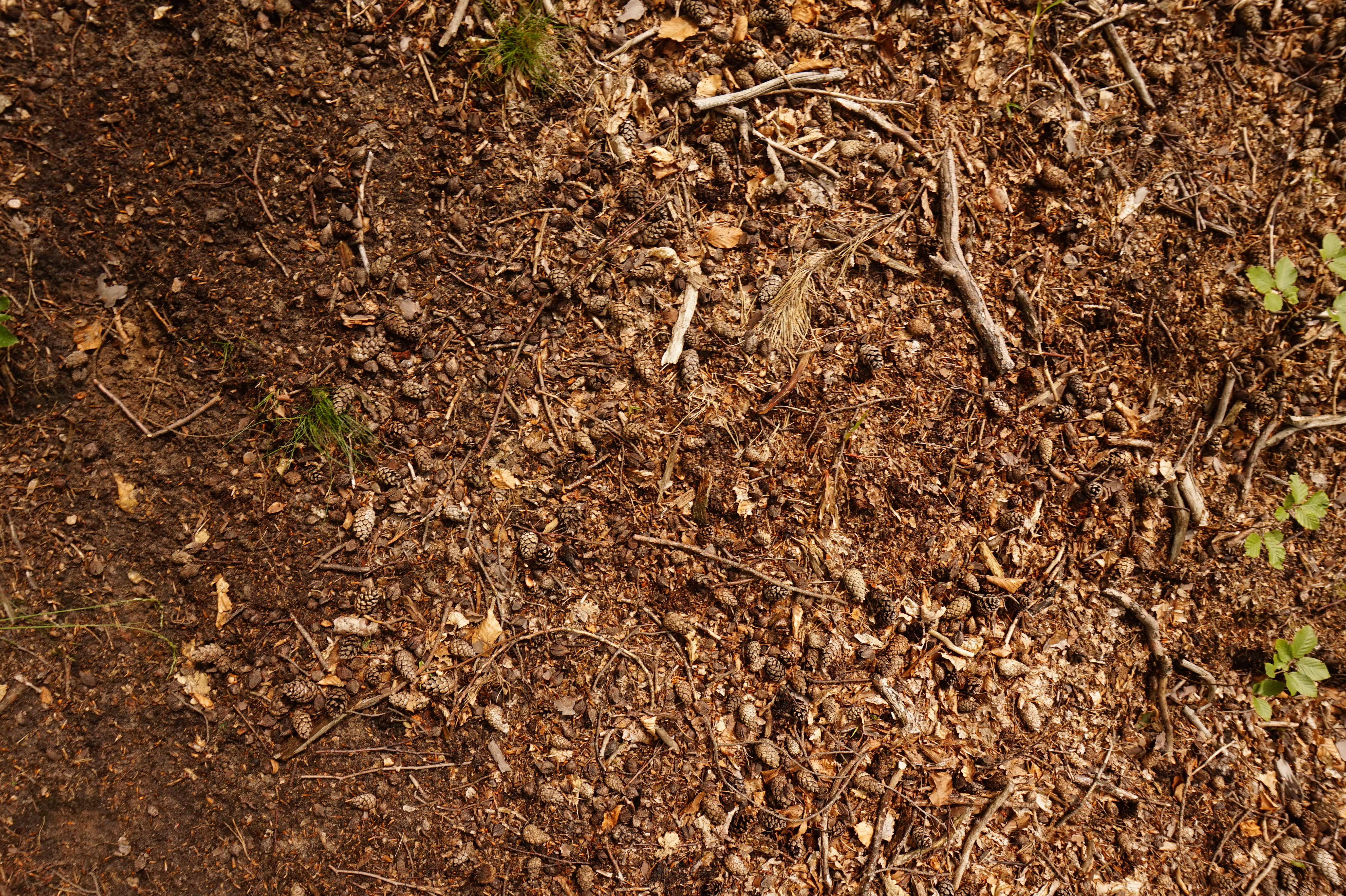 What is the soil in the forest steppe Type, features 79