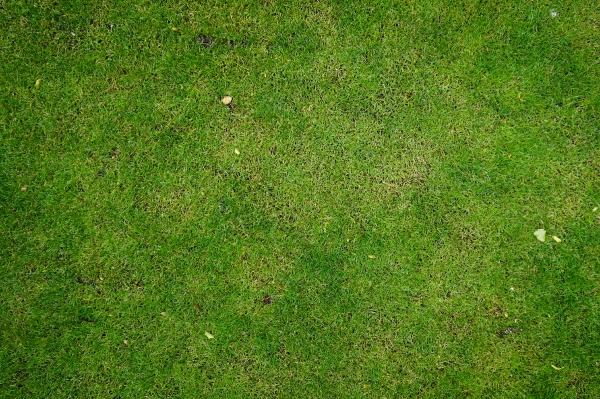 Grass 018 Grass Texturify Free Textures