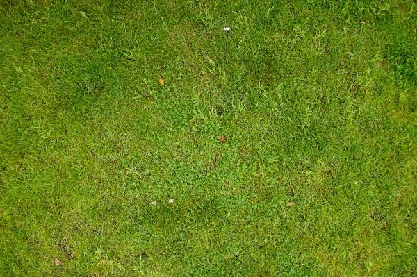 Grass 025 Grass Texturify Free Textures